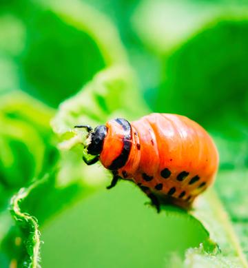 rubiolo agro farmaci insetticidi